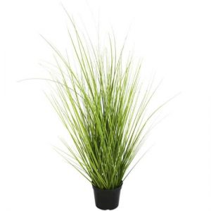 Wild Grass in Pot