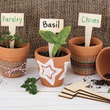 Decorated Pot Plants